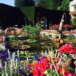 Beautiful flowers aplenty