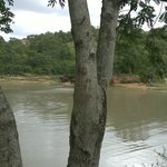 elephant near river