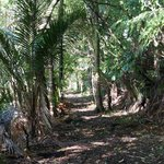 Fairry Falls, Waitakere National Park