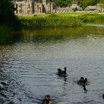 Lake & castle