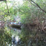 Into the mangrove tunnels