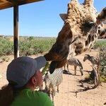 Kissing a giraffe