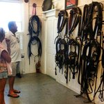 Harnesses for all of the Grand horses