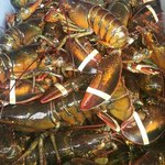 Lobsters coming in from the dock