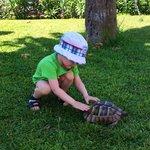 Нашли черепаху