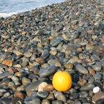noch eine Orange