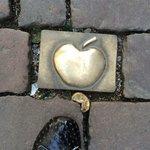 вот такие яблоки на мостовой