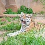 Riverbanks Zoo and Garden- JMB Photography