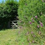 Farm Hedges