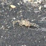 Crab!!!!!!!!!!!