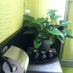 les wc :une ballade dans la verdure ....