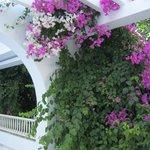 Lovely Flowers everywhere!
