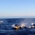 Orca whales came so close!