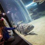 Our goliath grouper
