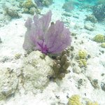 Lots of pretty coral to see