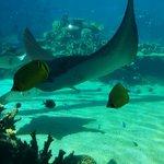 Shark Bay