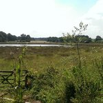 Across the marshland where you can birdwatch - with a list inside the hide