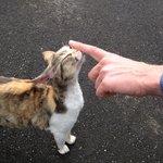 L'Arche Feline