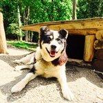 My favorite dog Big Boy - he was so handsome!