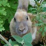 Bunny Linda