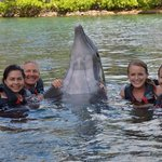 Our family dolphin encounter