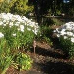 Daisies abound in the gardens.