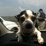 Lola on the water
