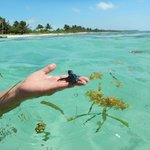 Baby sea turtle swimming in front of the resort! We brought it to the reef.