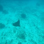 Eagle Ray. Mexico Rock. We paddled out with a Kayak.