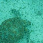 Turtle near the resort.