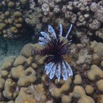 Lion Fish ... I didn't know it was poisonous until after we got out