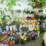 Flower shop next door
