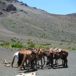 Horses taking a brake at lunch