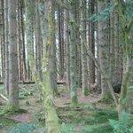 Woods; nearby falls walk