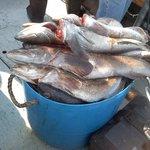 Bucket'o Sea Bass and Ling Cod
