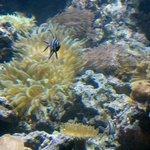 Misc Undersea Life