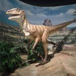 Dinosaur age
