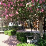 Garden Area - Enjoy Your Cup of Coffee Here - Peralta Adobe and Fallon House Historic Site, San