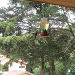 Humming birds on the terrace of the restaurant
