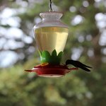 Humming birds in the restaurant