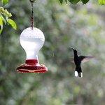 Huming birds garden