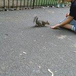 Les petits écureuils pas farouches