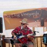 Big Dog Vineyards, Milpitas, Ca