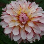 I love dahlias - the variety of flowers is amazing.