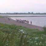 Wild horses on an evening stroll from Oortjeshekken
