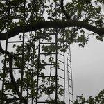 Les échelles dans le parc