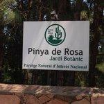 Pinya de Rosa