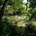 Brandywine River Behind the Museum
