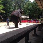 Poor elephant show