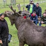 Public Kiss, Holger the Moose with Leffe the Moose man